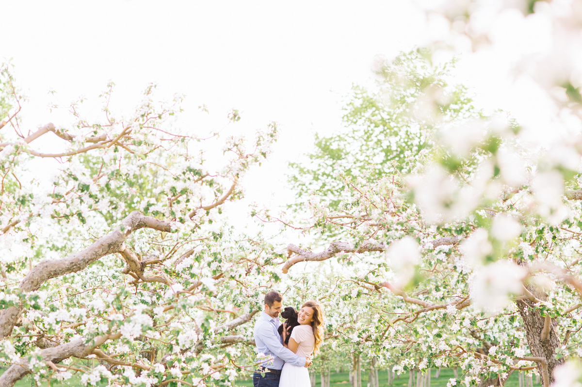 tara mcmullen photography toronto wedding photographer albion orchards apple blossom engagement photos associate photographer barb simkova-006